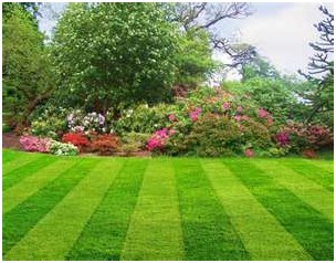 Lawn Care, Irrigation, Fertilization, Aeration, Dethatching